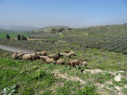 Photos from Golan and West Bank trip Feb 21-29 2016 832