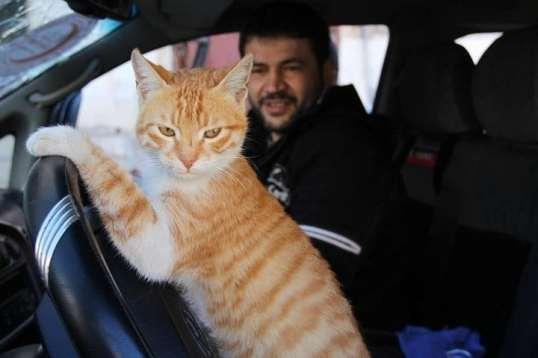 Alaa Cat Man and Ernesto